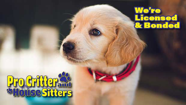 Pet Sitters in Plattsburgh NY | Professional Pet & Home Sitters!